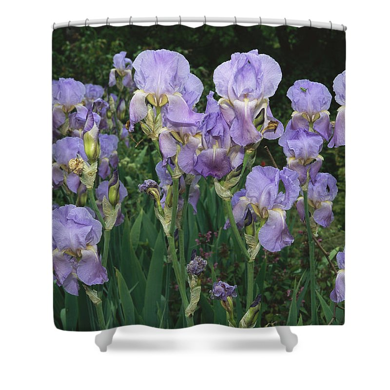 Plants Shower Curtain featuring the photograph Bed Of Irises, Provence Region, France by Nicole Duplaix
