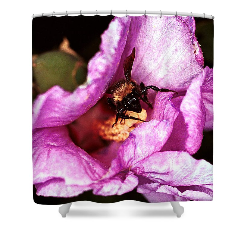 Flower Shower Curtain featuring the photograph Bee There by Jean Noren