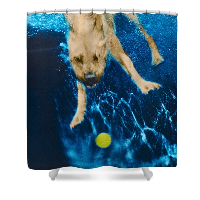 Dog Shower Curtain featuring the photograph Belly Flop by Jill Reger