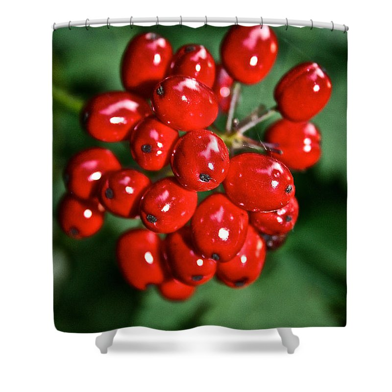 Outdoors Shower Curtain featuring the photograph Berry Brilliant by Susan Herber