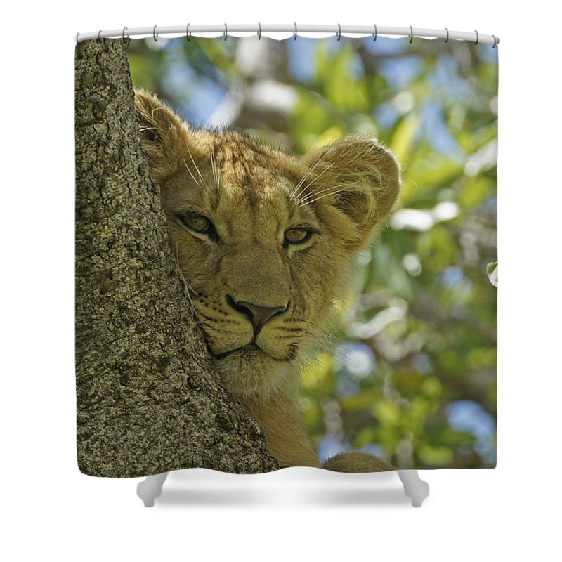 Africa Shower Curtain featuring the photograph Biding My Time by Michele Burgess