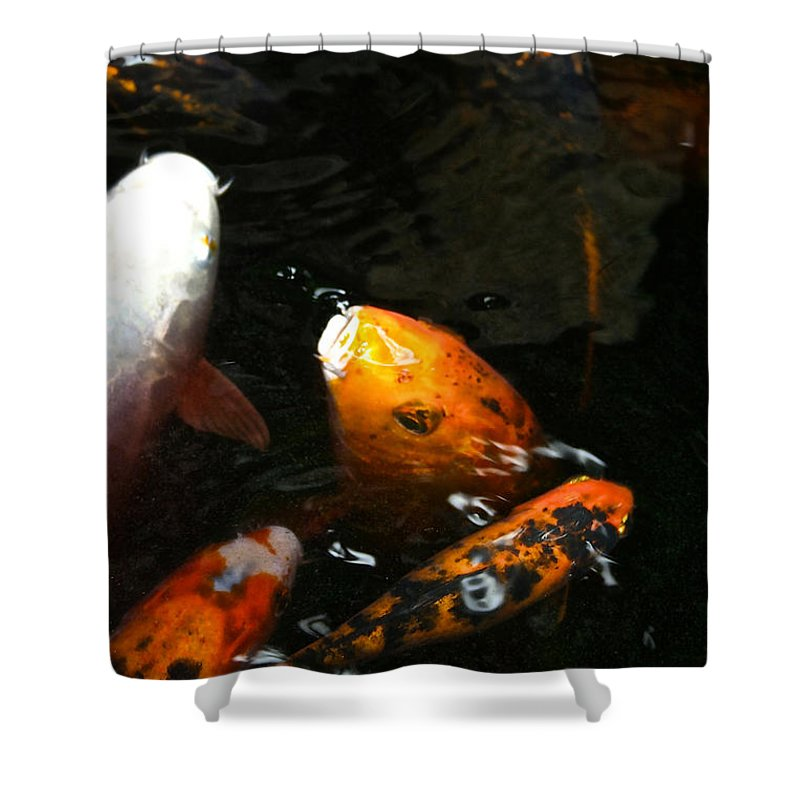 Fish Shower Curtain featuring the photograph Big Lip Koi Spit by Susan Herber