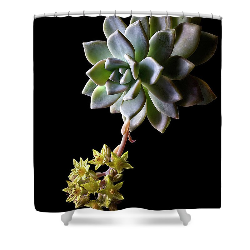 Flower Shower Curtain featuring the photograph Big Sedum by Endre Balogh