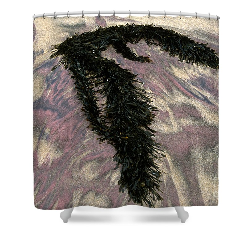 Sandra Bronstein Shower Curtain featuring the photograph Big Sur Sand And Algae by Sandra Bronstein