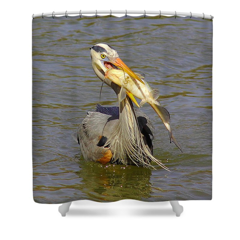 Great Blue Shower Curtain featuring the photograph Bigger Fish To Fry by Robert Frederick