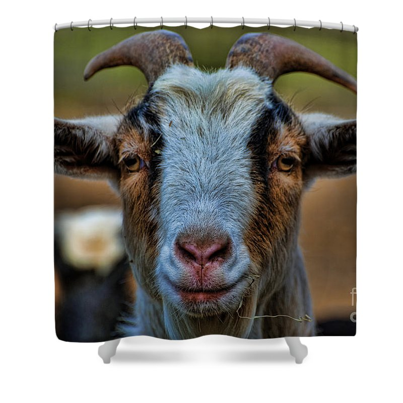 Goat Shower Curtain featuring the photograph Billy Goat by Paul Ward
