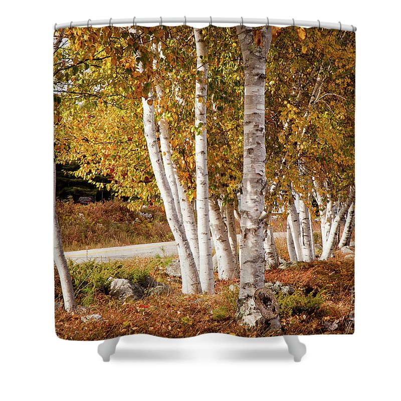 America Shower Curtain featuring the photograph Birch Road To Bridgton by Susan Cole Kelly