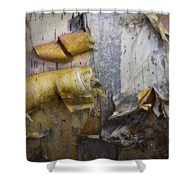 Art Shower Curtain featuring the photograph Birch Tree Bark No.0863 by Randall Nyhof