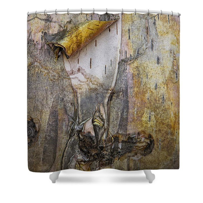 Art Shower Curtain featuring the photograph Birch Tree Bark No.0889 by Randall Nyhof