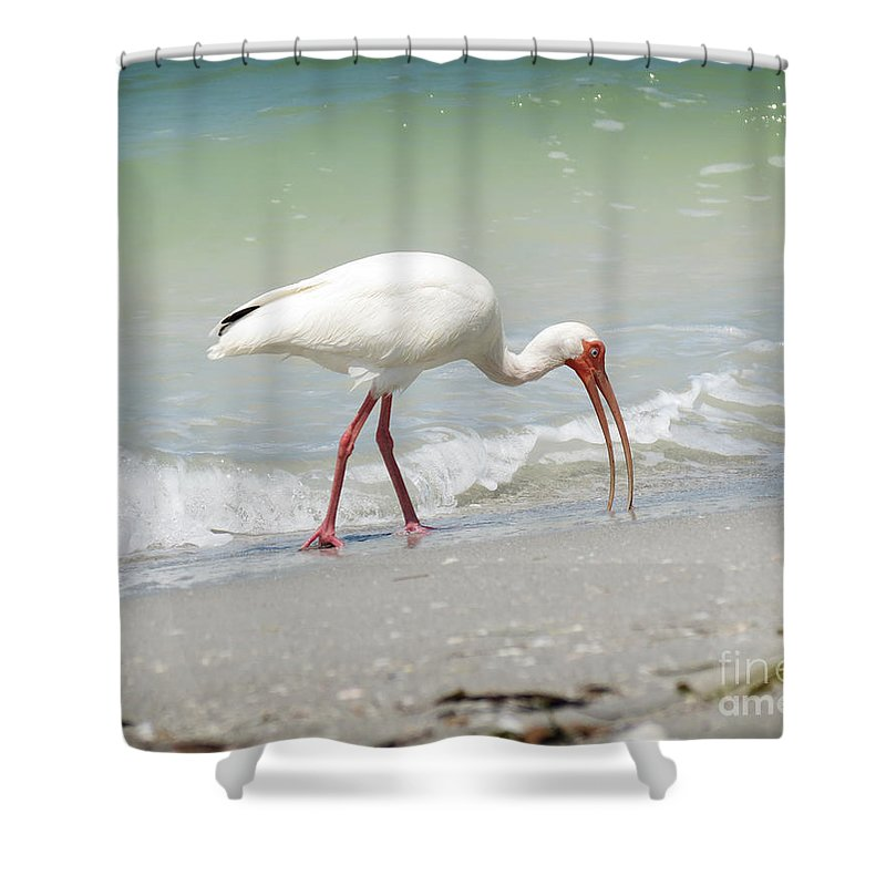 Florida Shower Curtain featuring the photograph Bird Breakfast by Chris Andruskiewicz