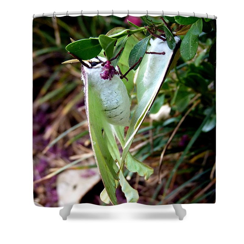 Luna Moth Shower Curtain featuring the photograph Birds And Bees And Luna Moths by Carla Parris