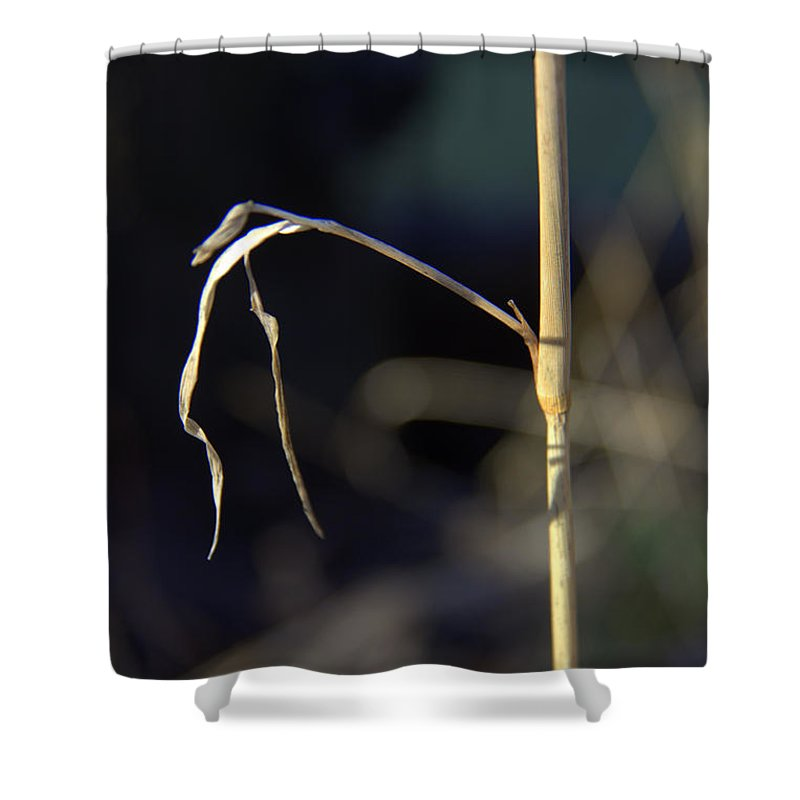 Birth Of A Scarecrow Shower Curtain featuring the photograph Birth Of A Scarecrow by Ed Smith