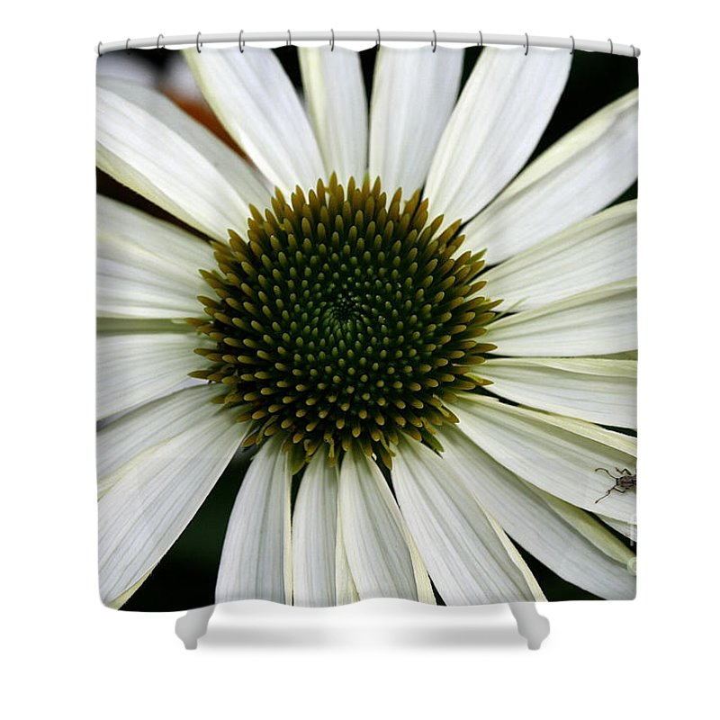 Plant Shower Curtain featuring the photograph Bitten By The Bug by Susan Herber