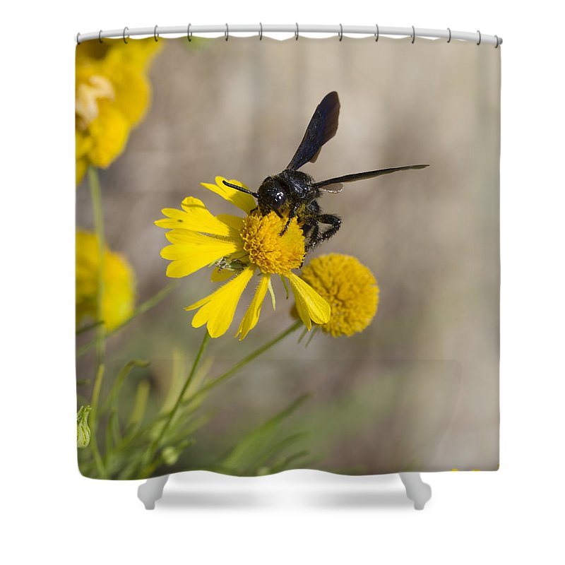 Bitterweed Shower Curtain featuring the photograph Bitterweed And Black Wasp by Kathy Clark
