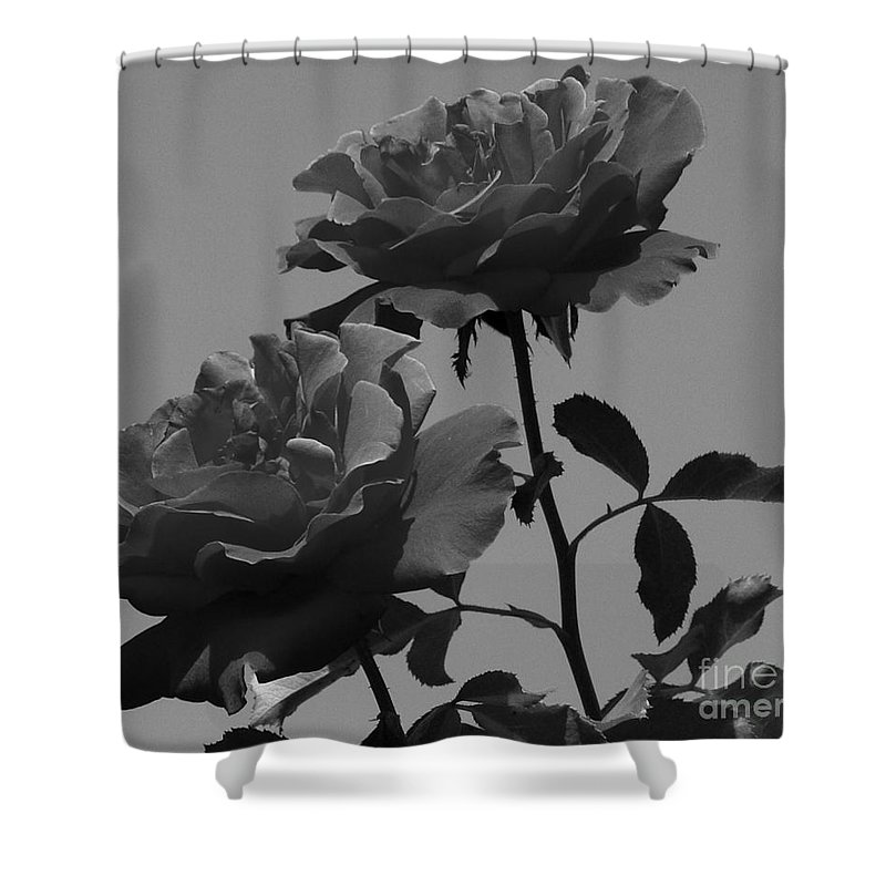 Flower Shower Curtain featuring the photograph Black And White Roses by Kevin Fortier