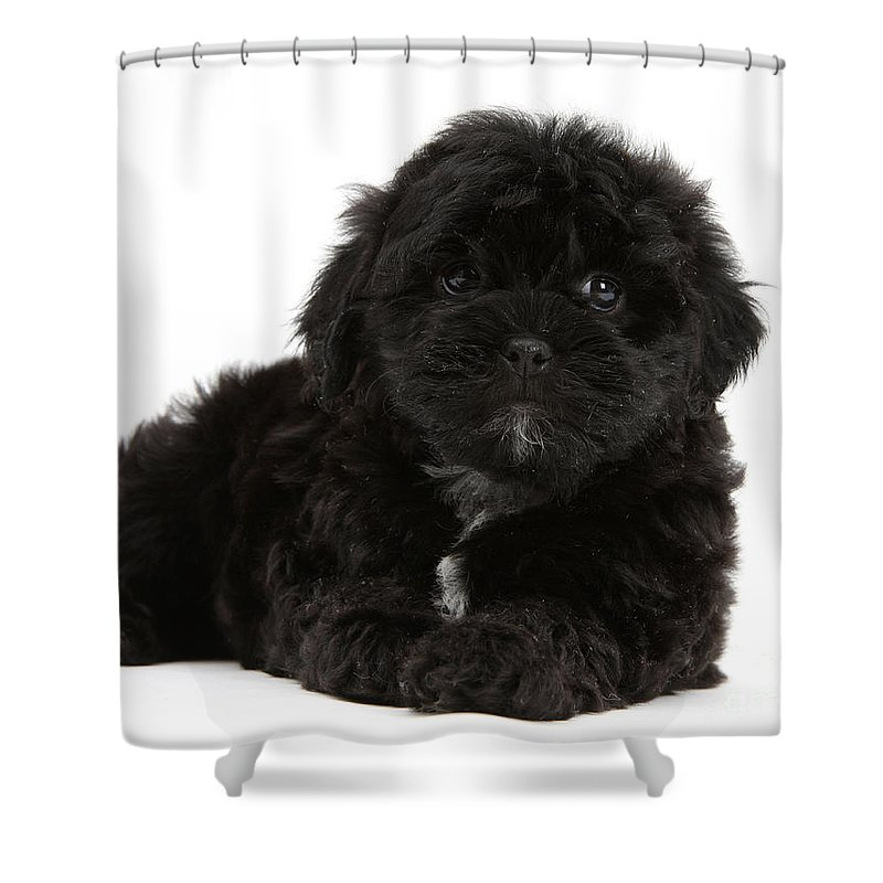 Animal Shower Curtain featuring the photograph Black Cockerpoo Puppy by Mark Taylor