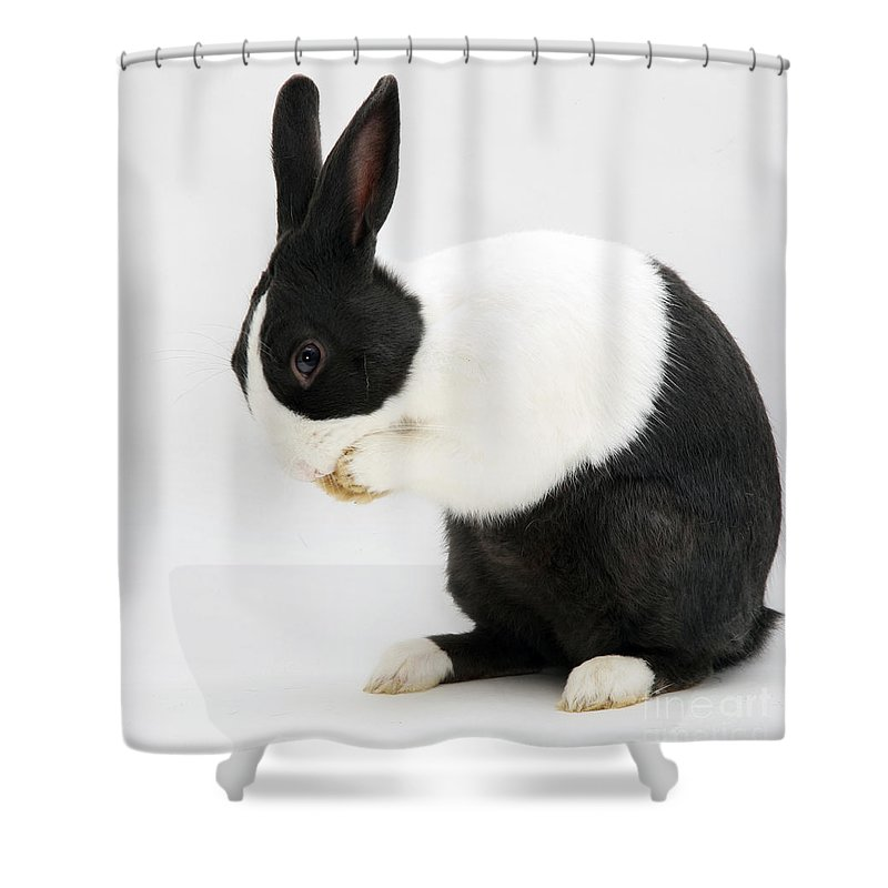 Animal Shower Curtain Featuring The Photograph Black Dutch Rabbit By Jane Burton