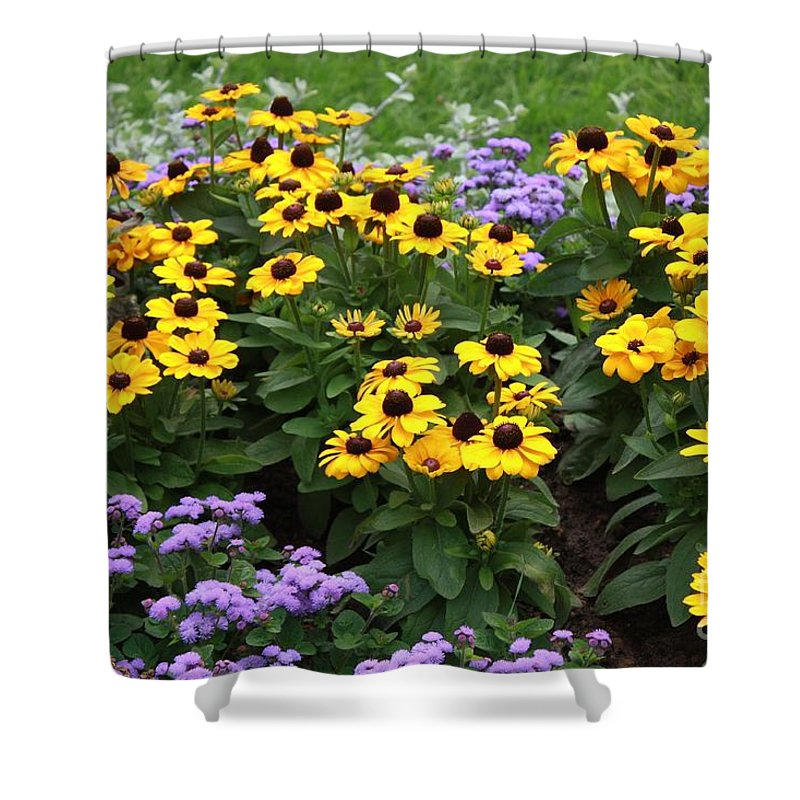 Black-eyed Susan Shower Curtain featuring the photograph Black Eyed Susan In Castle Garden by Carol Groenen