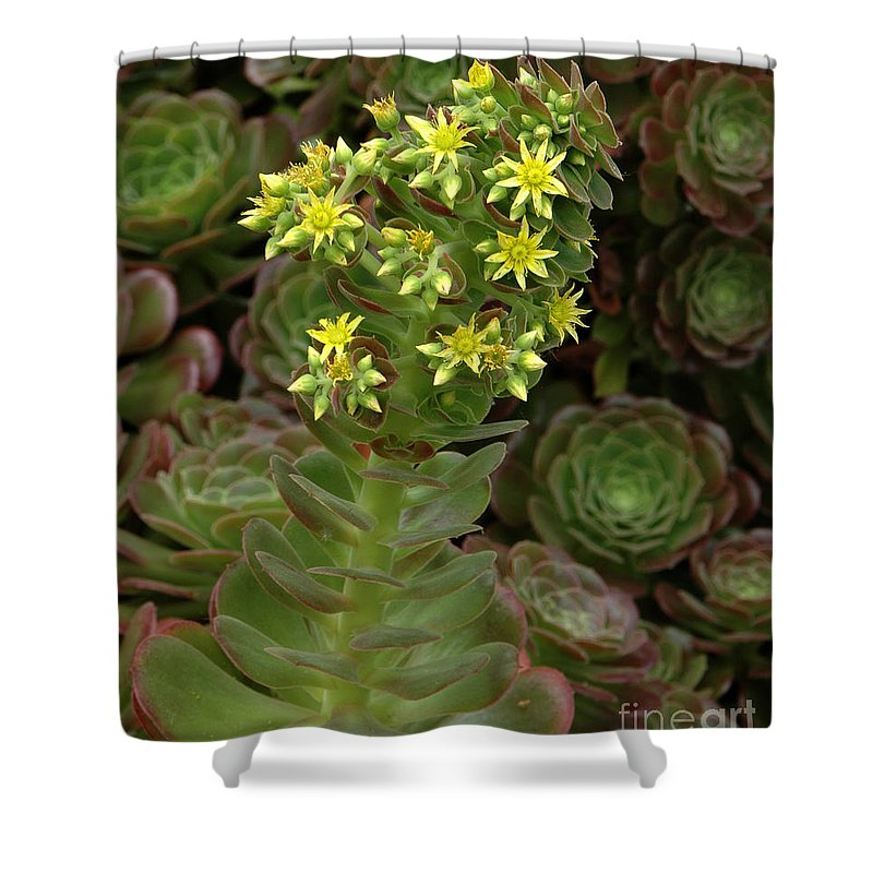 Blooming Shower Curtain featuring the photograph Blooming Succulents by Mike Nellums