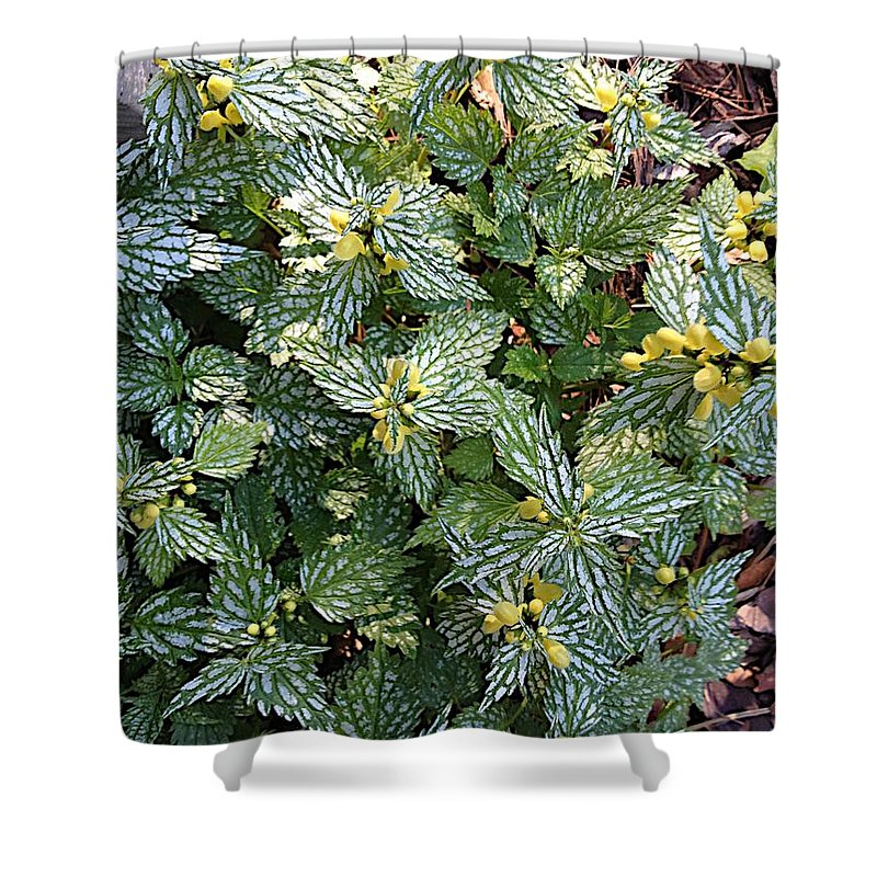 Flowers Shower Curtain featuring the photograph Blooms by Joseph Yarbrough