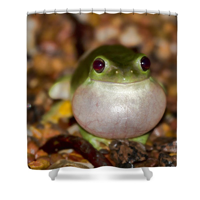 Green Tree Frog Shower Curtain featuring the photograph Blown Up by Douglas Barnard