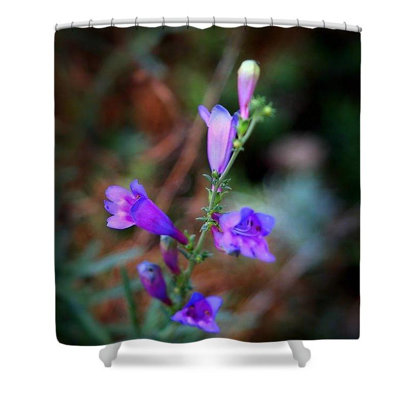 Beautiful Shower Curtain featuring the photograph Blue Bells by Henrik Lehnerer