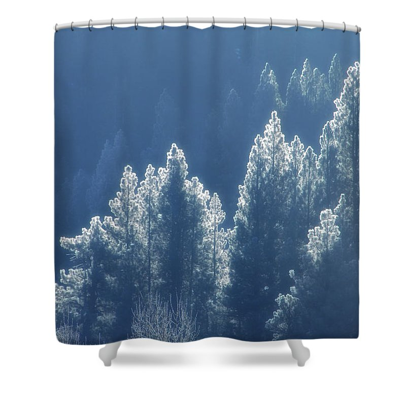 Winter Shower Curtain featuring the photograph Blue Christmas by Donna Blackhall