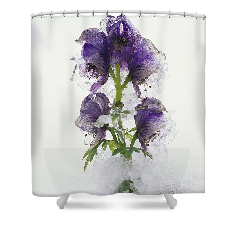 Europe Shower Curtain featuring the photograph Blue Monkshood Flowers In Ice by Norbert Rosing