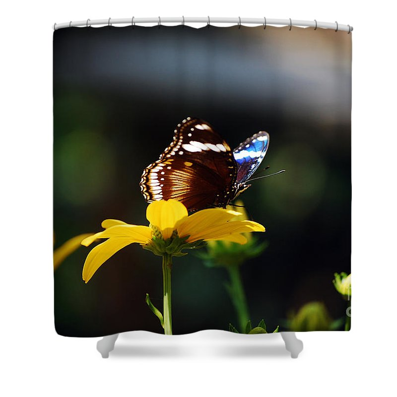 Blue Moon Butterfly Shower Curtain featuring the photograph Blue Moon by Robert Meanor