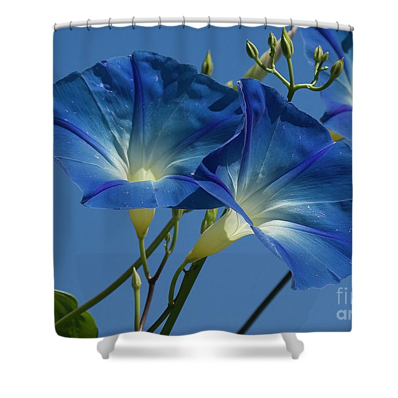 Morning Shower Curtain featuring the photograph Blue Morning by Jim And Emily Bush