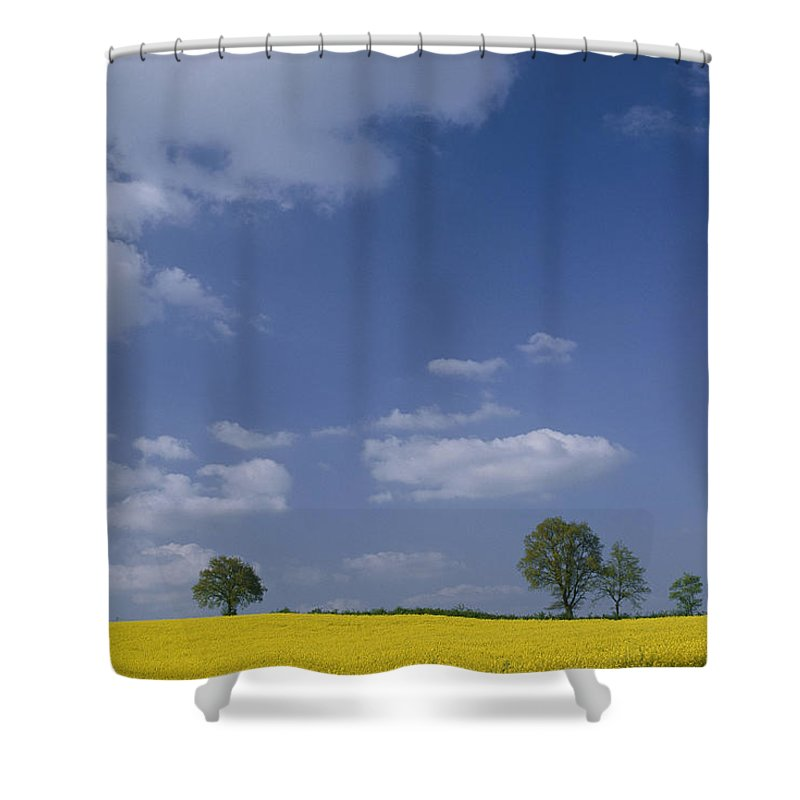 Sky Shower Curtain featuring the photograph Blue Sky Covers A Yellow Field by Todd Gipstein
