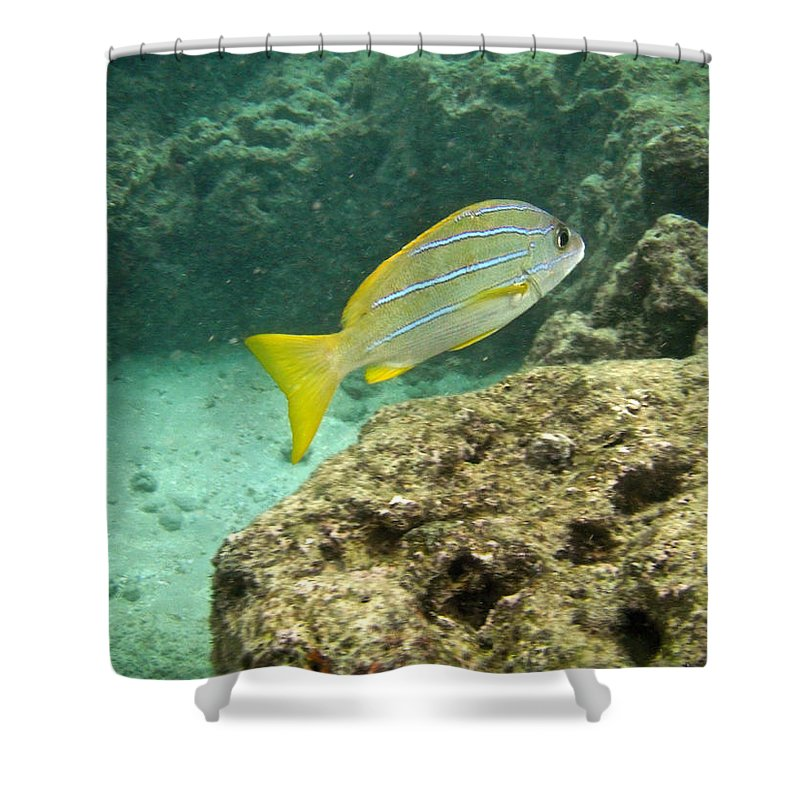 Animal Shower Curtain featuring the photograph Blueline Snapper by Michael Peychich