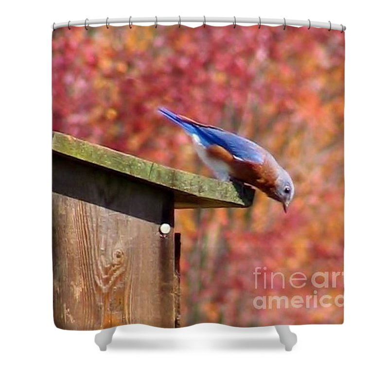 Blue Shower Curtain featuring the photograph Bluey by Art Dingo