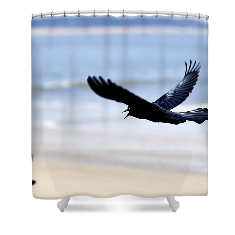 Boat-tailed Shower Curtain featuring the photograph Boat-tailed Grackle - D006732 by Daniel Dempster