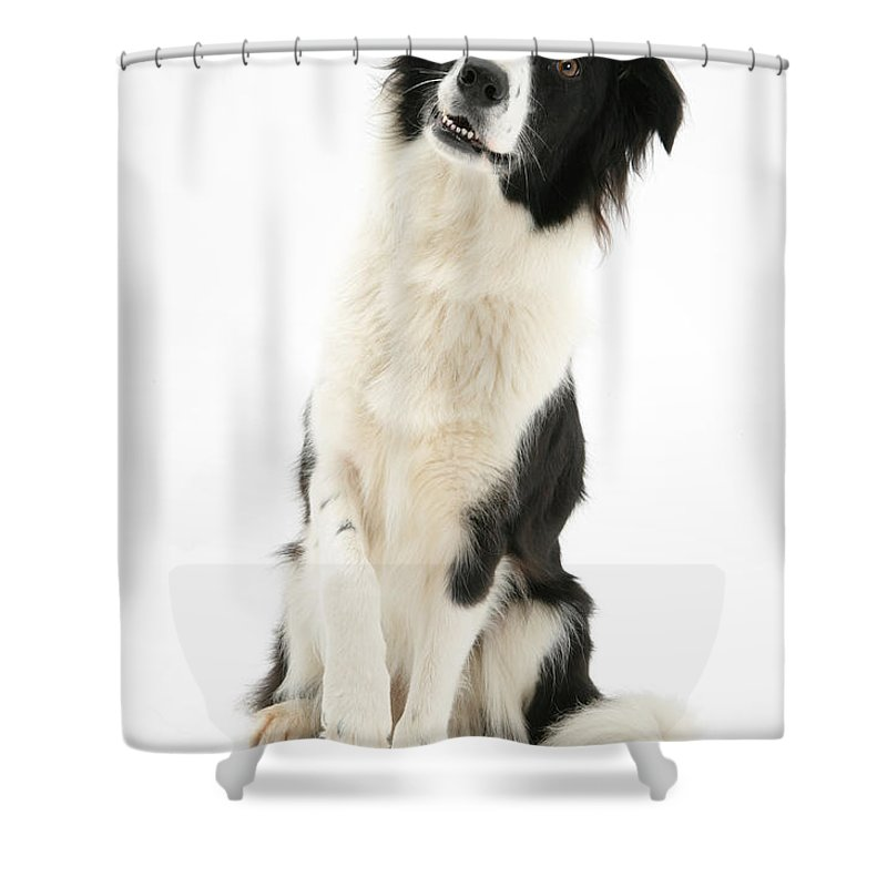 Animal Shower Curtain featuring the photograph Border Collie by Mark Taylor