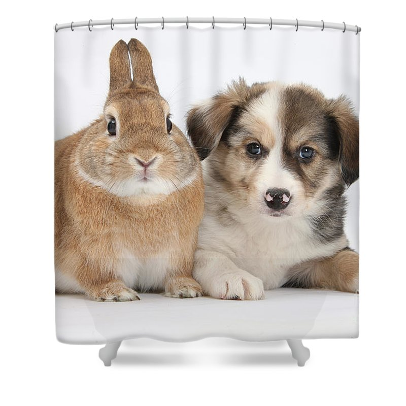 Nature Shower Curtain featuring the photograph Border Collie Pup And Sandy by Mark Taylor