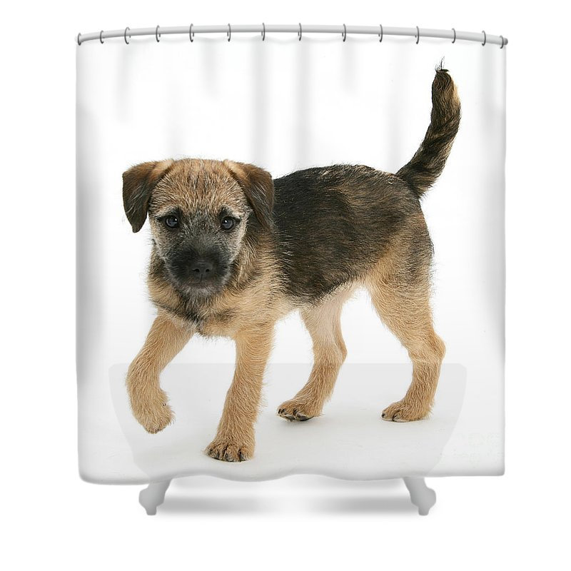 Animal Shower Curtain featuring the photograph Border Terrier Puppy by Mark Taylor