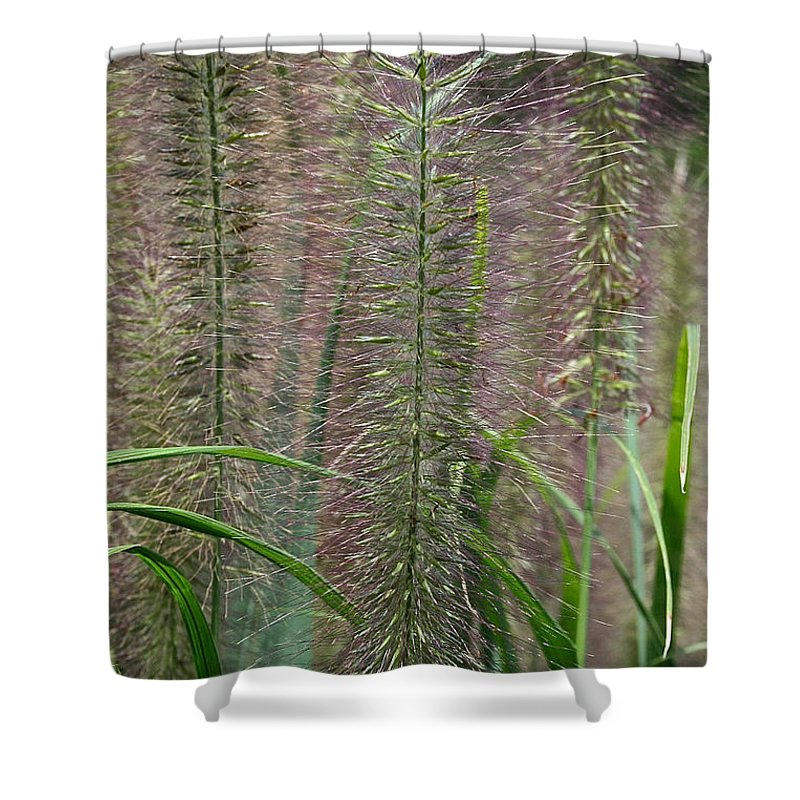 Outdoors Shower Curtain featuring the photograph Bottle Brush Grass by Susan Herber