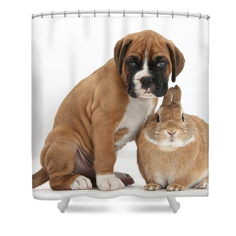 Nature Shower Curtain featuring the photograph Boxer Puppy And Netherland-cross Rabbit by Mark Taylor