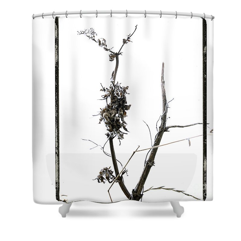 Worms-eye Shower Curtain featuring the photograph Branch Of Dried Out Flowers. by Bernard Jaubert