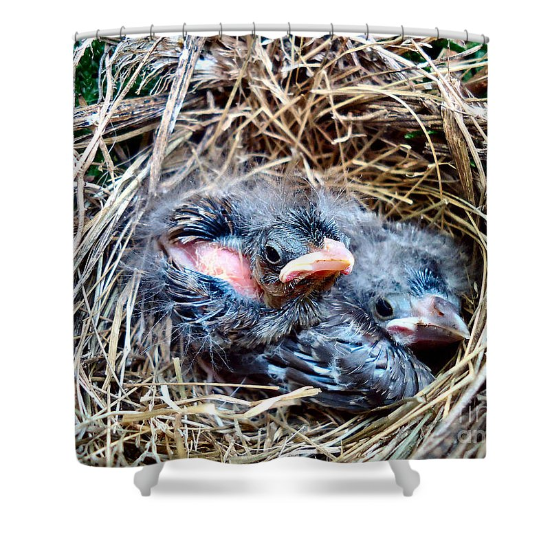 Bird Shower Curtain featuring the photograph Brothers by Art Dingo
