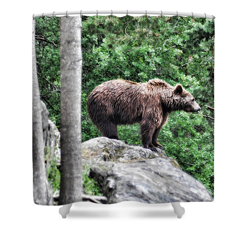 Bear Shower Curtain featuring the painting Brown Bear 208 by Dean Wittle