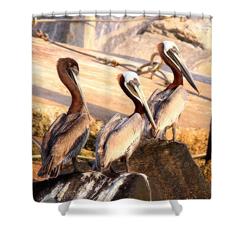 Bird Shower Curtain featuring the photograph Brown Pelican - Holding Things Together by Travis Truelove