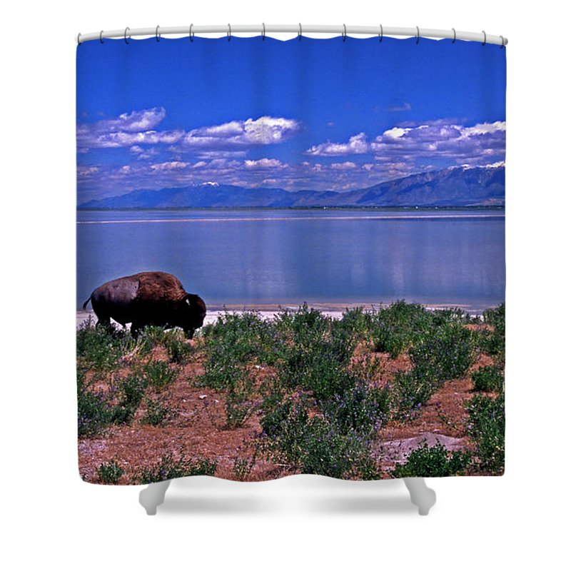 Utah Shower Curtain featuring the photograph Buffalo And The Great Salt Lake by Rich Walter