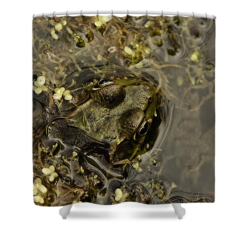 Usa Shower Curtain featuring the photograph Bug Eyed Pond Frog by LeeAnn McLaneGoetz McLaneGoetzStudioLLCcom