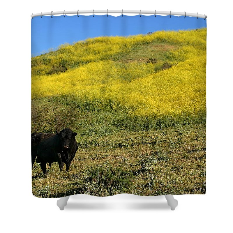Agriculture Shower Curtain featuring the photograph Bull by Henrik Lehnerer