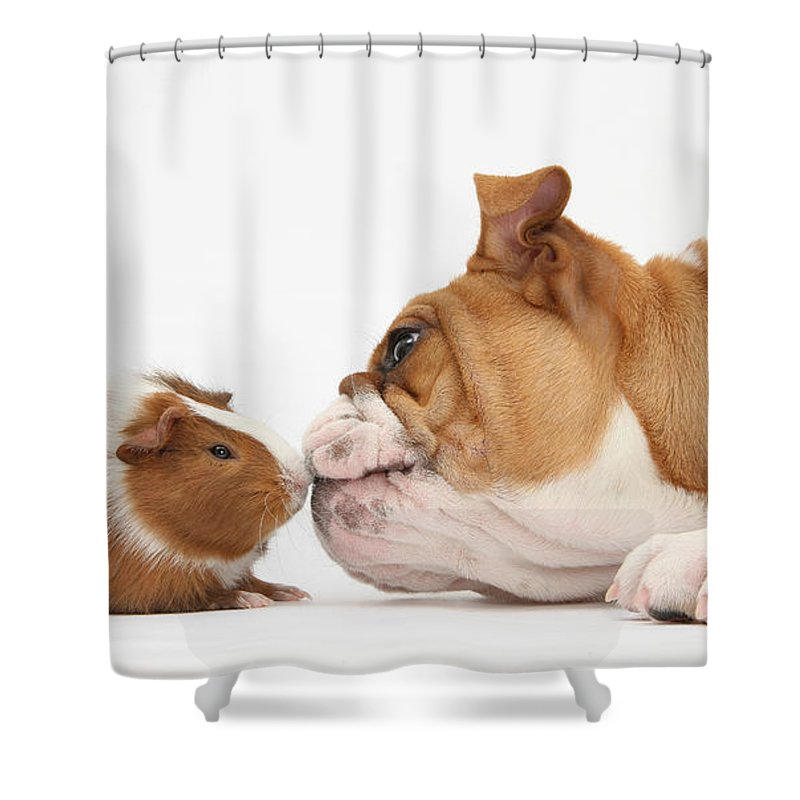 Animal Shower Curtain featuring the photograph Bulldog & Guinea Pig by Mark Taylor