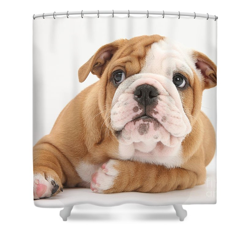Dog Shower Curtain featuring the photograph Bulldog Pup by Mark Taylor