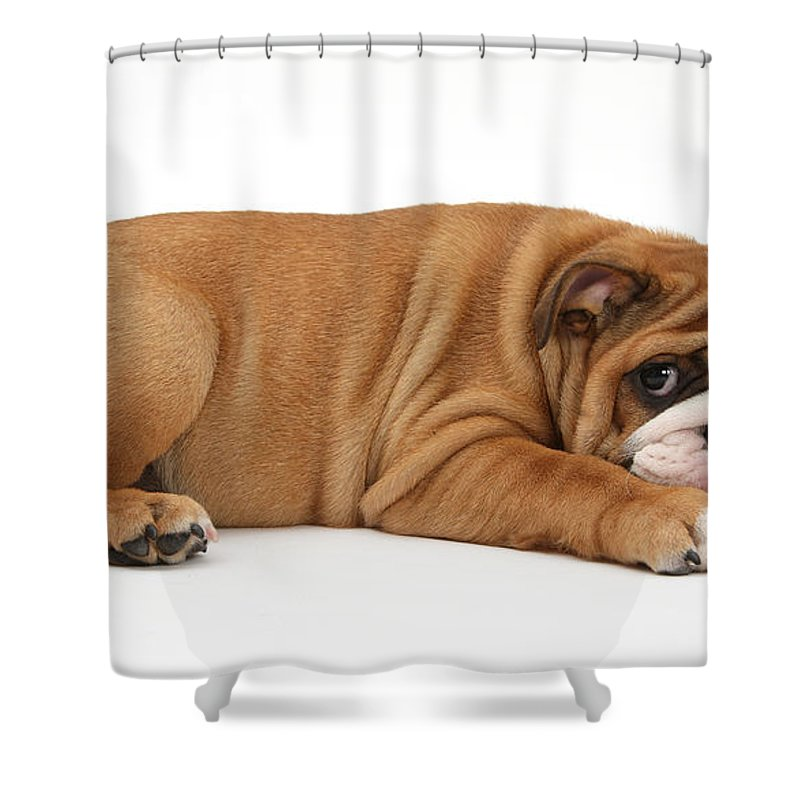 Animal Shower Curtain featuring the photograph Bulldog Puppy by Mark Taylor