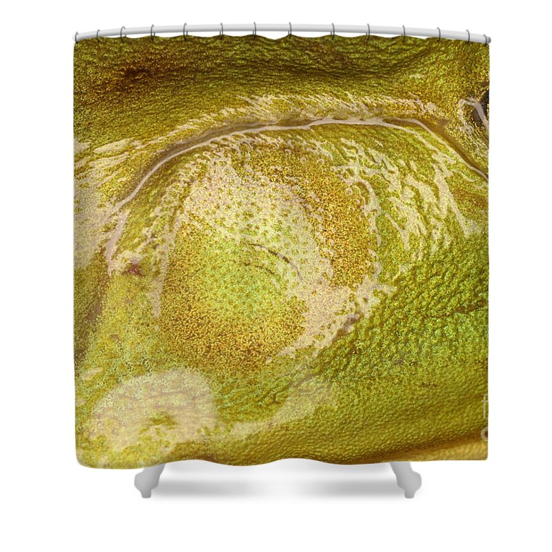 Animal Shower Curtain featuring the photograph Bullfrog Ear by Ted Kinsman